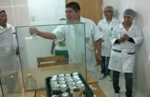 Reproduction of Orchids in vitro for the conservation of the native flora of Cerro Nimachay